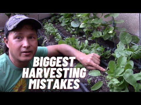 10 Harvesting Mistakes that Lower Yield of Herbs & Leafy Greens