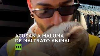 Maluma acaricia a un cachorro de león y cierra su Instagram por las críticas