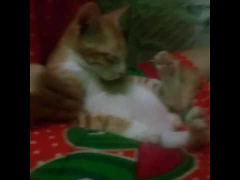 cewek cantik onani sama kucing