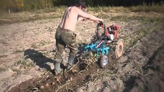 Копание картошки МБ