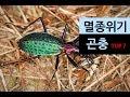(랭킹박스) 한국 멸종 위기 곤충 TOP 7