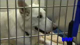 Heartworm Disease Continues to Plague Pets