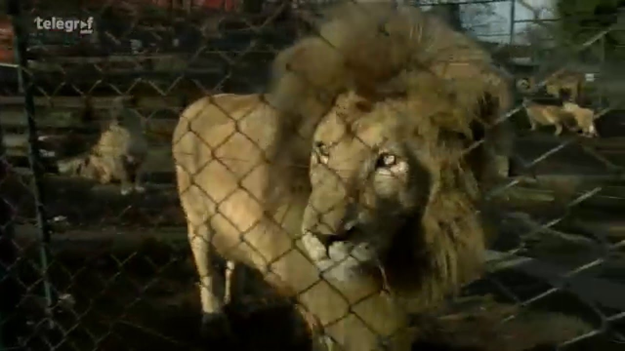 Zanimljivosti koje niste znali o životinjama iz Zoološkog vrta u Beogradu