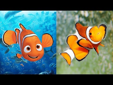 Finding Dory Characters In Real Life   All Characters 2017