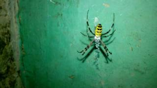 Check out the most amazing spiders in the world! From scary tarantula to awesome peacock spider!