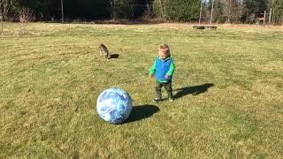 猫まっしぐら!ボール遊びをしている子供の背後から…