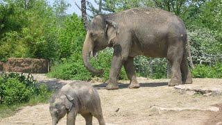 Saint Louis (MO) United States  city images : Visiting Animals in Saint Louis Zoo | St. Louis | Missouri | United States 2015