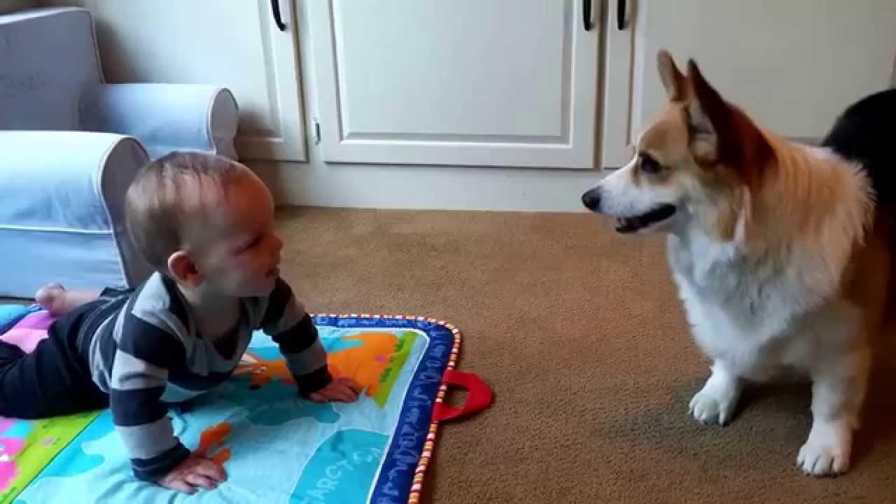 Pas bi da se igra, ali beba kulira