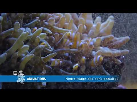 RDV nourrissage et secrets d'aquariologiste