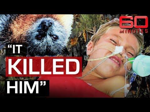Deadly threat of Bat Lyssavirus   60 Minutes Australia