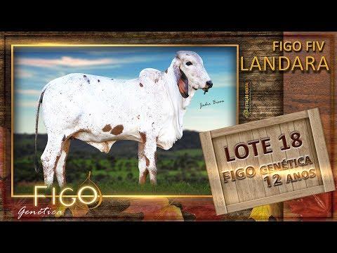 LOTE 18 - FIGO FIV LANDARA