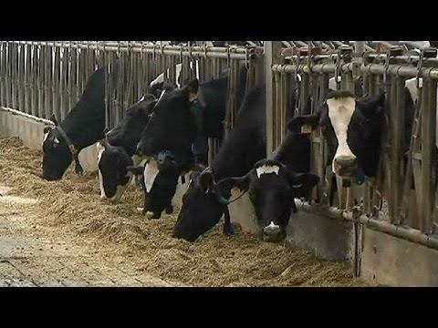 Βέλγιο: Σε καραντίνα ολόκληρη φάρμα εξαιτίας φυματίωσης
