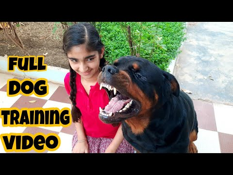 dog showing all training skills  well trained dog   dog protection skill