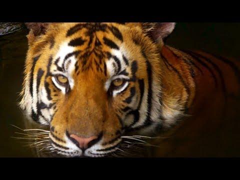 10 Incredible 4K (Ultra HD) Videos (видео)