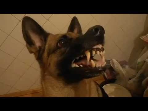 un cane che risponde a comando