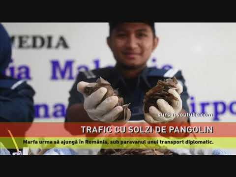 Transport ilegal de solzi de pangolin cu destinația România, capturat la Istanbul