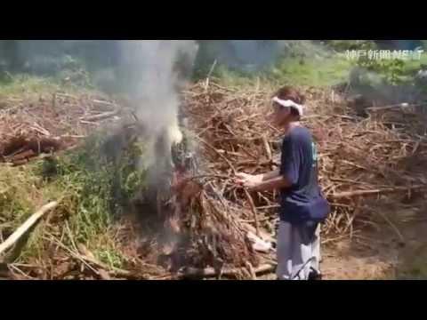 「赤花そば」栽培地で60年ぶりに焼き畑復活 豊岡・但東町