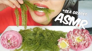 ASMR RAW SEA GRAPES (EXTREME CRUNCH EATING SOUNDS) NO TALKING | SAS-ASMR