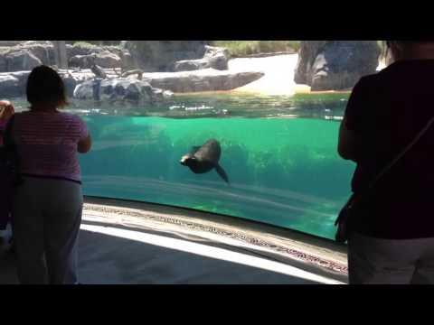 「你還好嗎?」女童摔倒,海獅停下來關切!