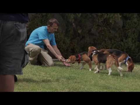 beagle finalmente liberi