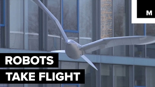 'SmartBird' by Festo is a robotic bird that can easily take off, fly and even land all by itself.READ MORE: http://mashable.com/FACEBOOK: https://www.facebook.com/mashable/TWITTER: https://twitter.com/mashableINSTAGRAM: https://www.instagram.com/mashable/
