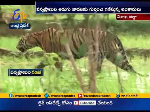 Tiger Census, and Animal Count | at End in State