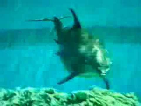 Delfin dando a luz