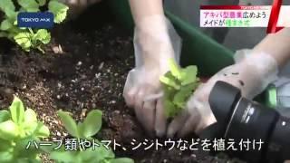 メディア掲載:秋葉原菜園