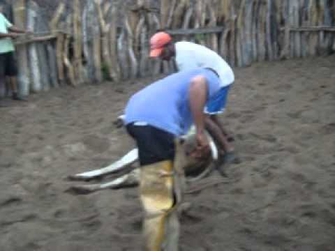 capando o garrote-são gonçalo do gurguéia