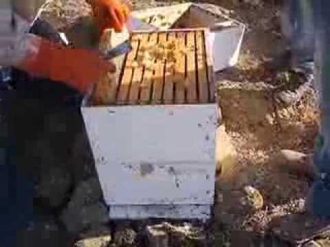 Τρύγος Μελισσιών Αστυπάλαια 2013 Κέρανθος