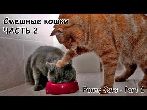Смешные коты и кошки - видео приколы с кошками 2 - DomaVideo.Ru