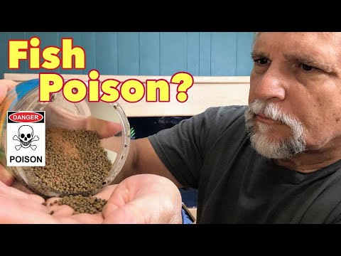"""Tropical Fish Food """"Master Class"""" [Interview with the Owner of Piscine Energetics] - Ep. 1 of 5"""