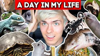 My Pet Care Routine- A Day in My Life with 50 Pets by Tyler Rugge