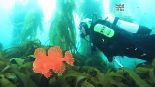 Eaglehawk Australia  City new picture : 25 years of diving with Eaglehawk Dive Centre - Tasmania, Australia
