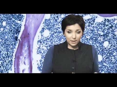 Смотреть 24_DOC: КАТЕРИНА ГОРДЕЕВА О РАКЕ И ОБЩЕСТВЕ онлайн в отличном качестве и без регистрации на Sufar.ru