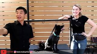 Video PANSOS BERSAMA SELEBRITIS CANTIK NATASHA RYDER & ANJING KESAYANGANNYA YANG SETIA MP3, 3GP, MP4, WEBM, AVI, FLV Juli 2019
