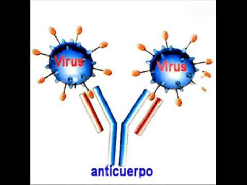 Biología - Reacción antígeno anticuerpo