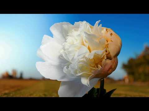 MOUNTAINEER - Hymnal: Passage III (OFFICIAL VIDEO) (видео)