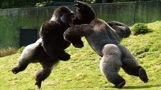 This is why Martial Arts have Animal Styles
