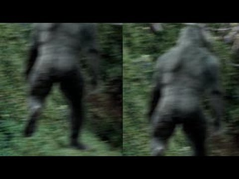 Photo of a Possible Bigfoot in Georgia, USA