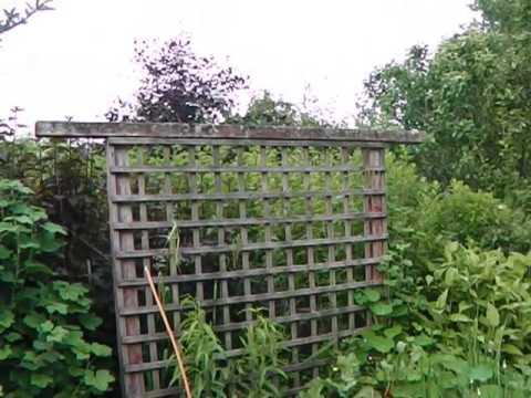 Permaculture Edible Gardens