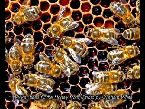 The Organic View: How To Legalize Backyard Beekeeping