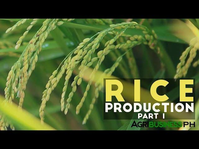 Rice-production-part-1
