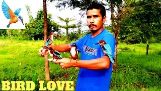 Kingfisher friendship with man from Assam, AMAZING !!!