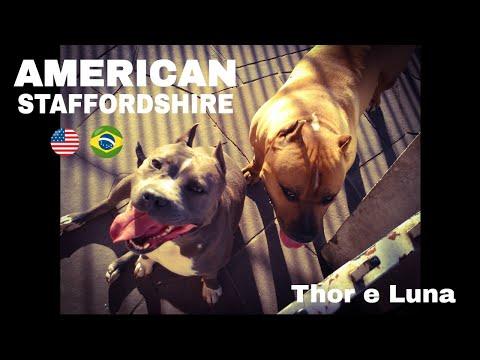 thor e luna - due cani bellissimi!
