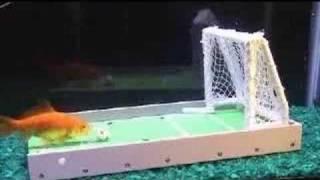 Tierische Fußballer