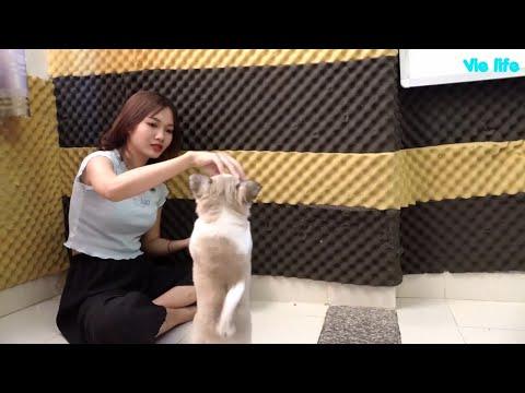Vie Girl chơi đùa với mèo và cún cưng