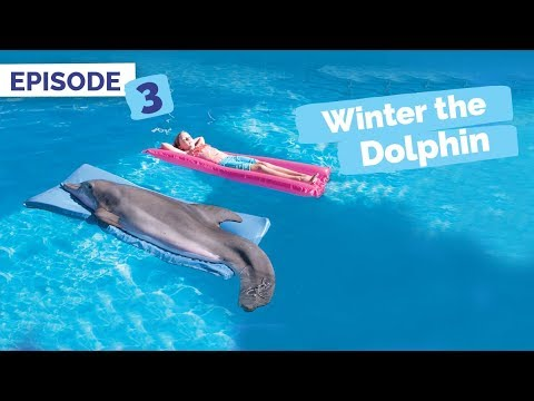 Dolphin Tale Memories - Winter the Dolphin: Saving Winter - Episode 3
