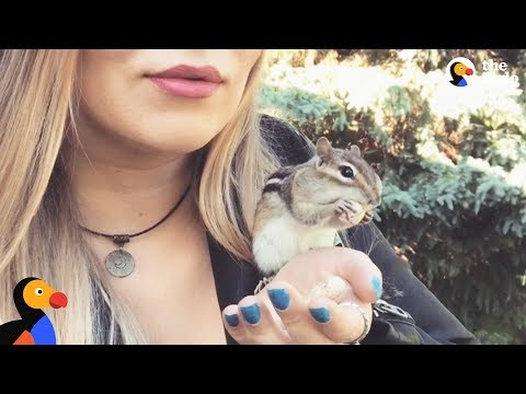 Wild Chipmunk Chooses Nicest Lady To Be His New BFF - VAN GOGH | The Dodo