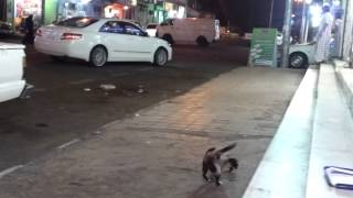 Al Ula Saudi Arabia  city photos gallery : Al ula Saudi Arabia with Amazing Cat